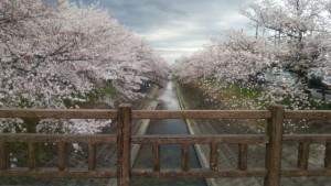 大中公園 桜